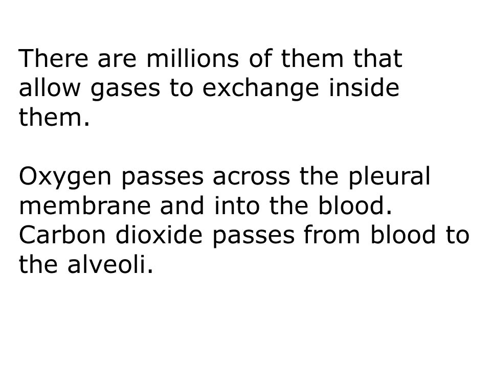 There are millions of them that allow gases to exchange inside them.