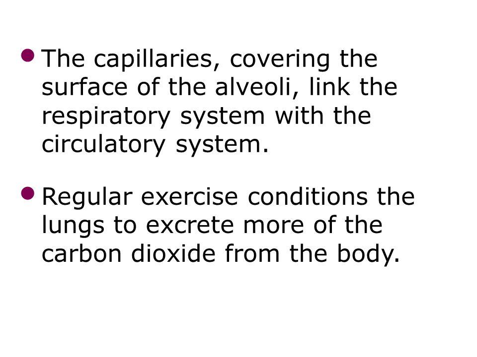 Mechanisms of breathing 34