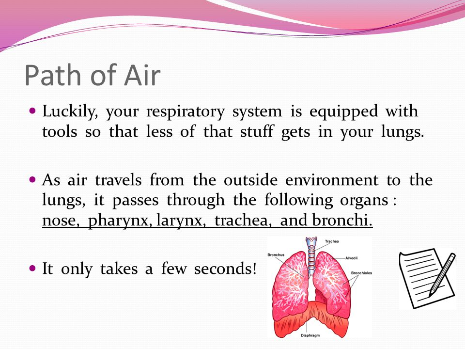 Path of Air Luckily, your respiratory system is equipped with tools so that less of that stuff gets in your lungs.