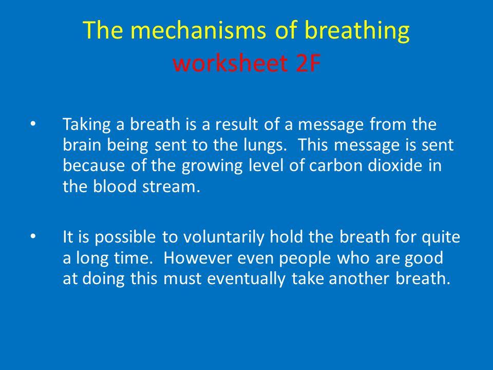 The mechanisms of breathing worksheet 2F