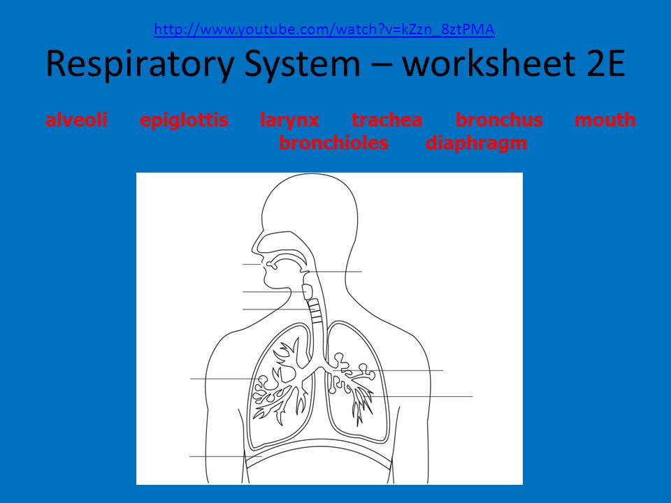 100 respiratory system worksheet functions and structures of the respiratory system. Black Bedroom Furniture Sets. Home Design Ideas