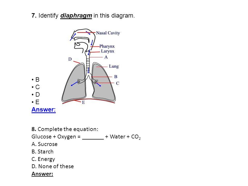 7. Identify diaphragm in this diagram.