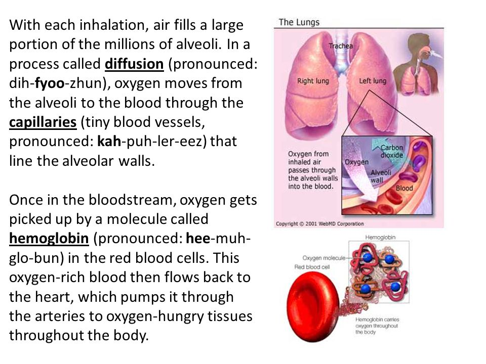 With each inhalation, air fills a large portion of the millions of alveoli. In a process called diffusion (pronounced: dih-fyoo-zhun), oxygen moves from the alveoli to the blood through the capillaries (tiny blood vessels, pronounced: kah-puh-ler-eez) that line the alveolar walls.