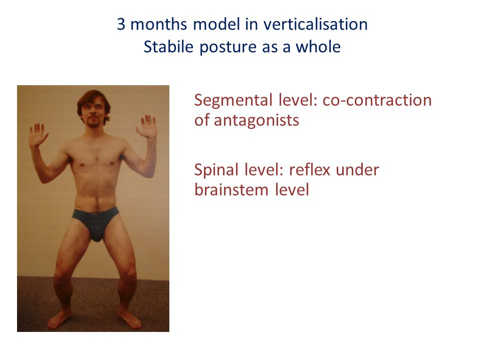 3 months model in verticalisation Stabile posture as a whole