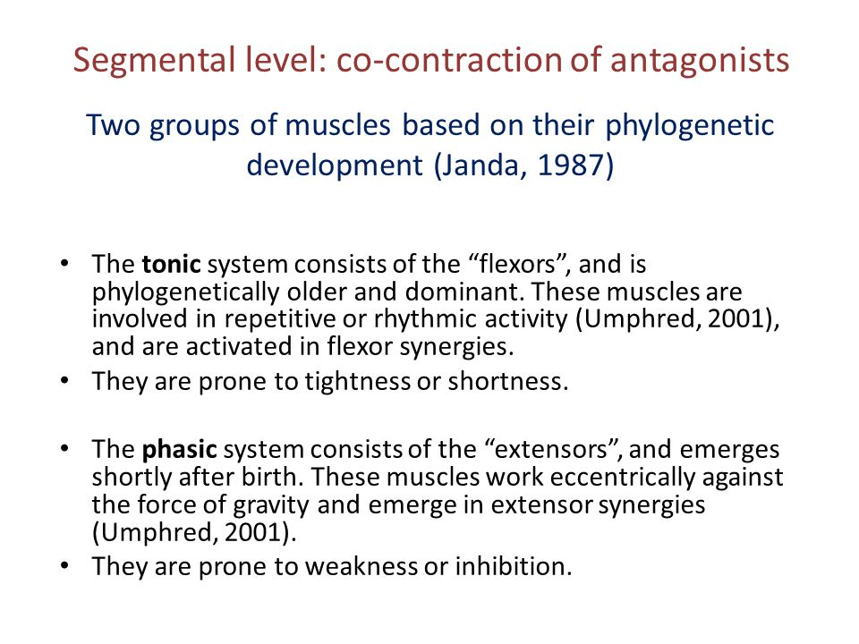 Segmental level: co-contraction of antagonists
