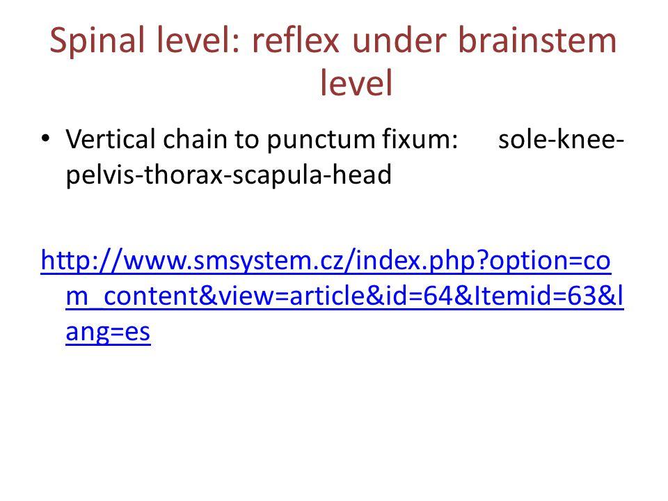 Spinal level: reflex under brainstem level