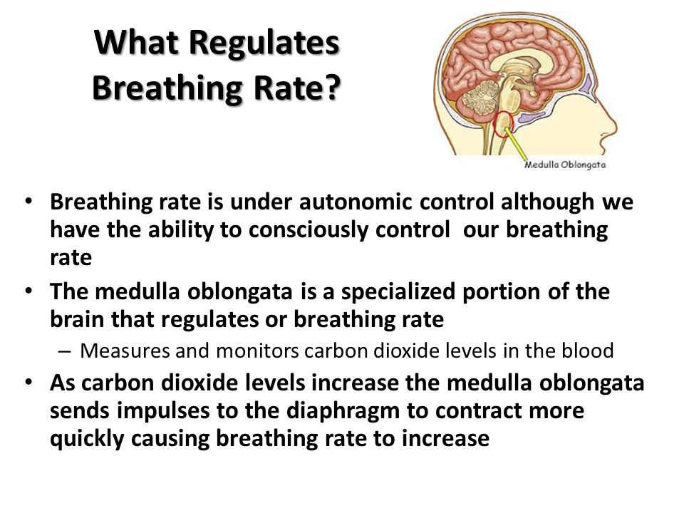 What Regulates Breathing Rate