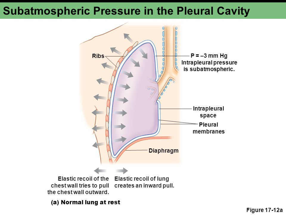 Subatmospheric Pressure in the Pleural Cavity