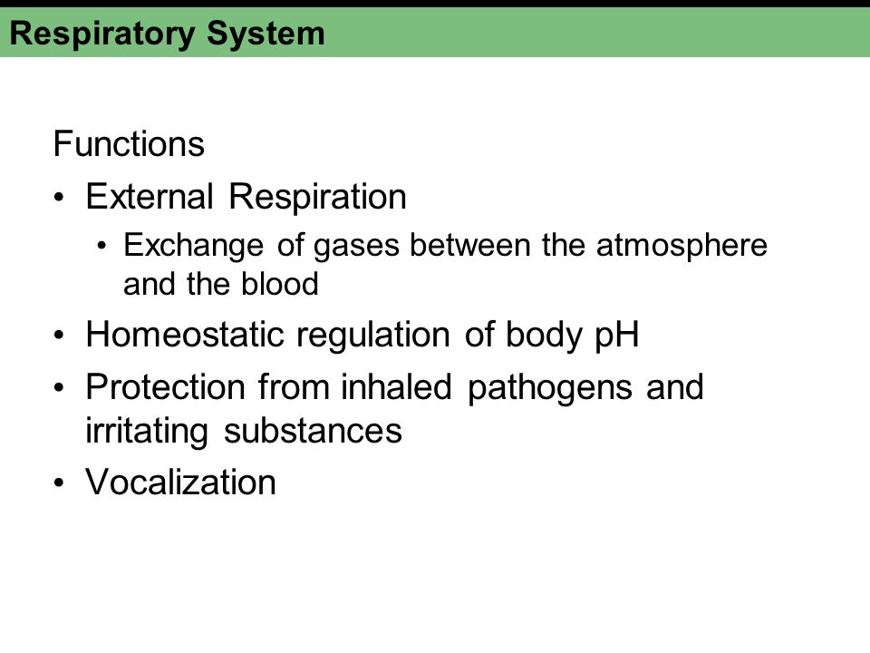 Homeostatic regulation of body pH