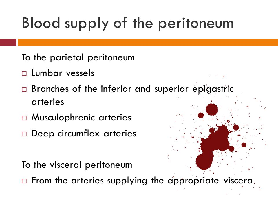 Blood supply of the peritoneum