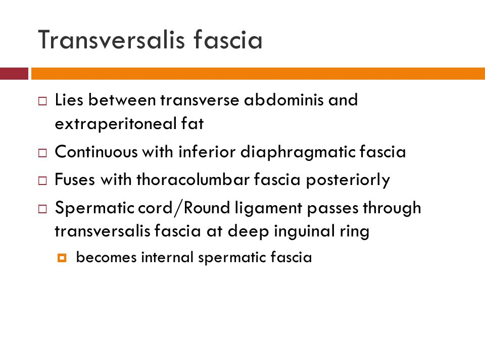 Transversalis fascia Lies between transverse abdominis and extraperitoneal fat. Continuous with inferior diaphragmatic fascia.