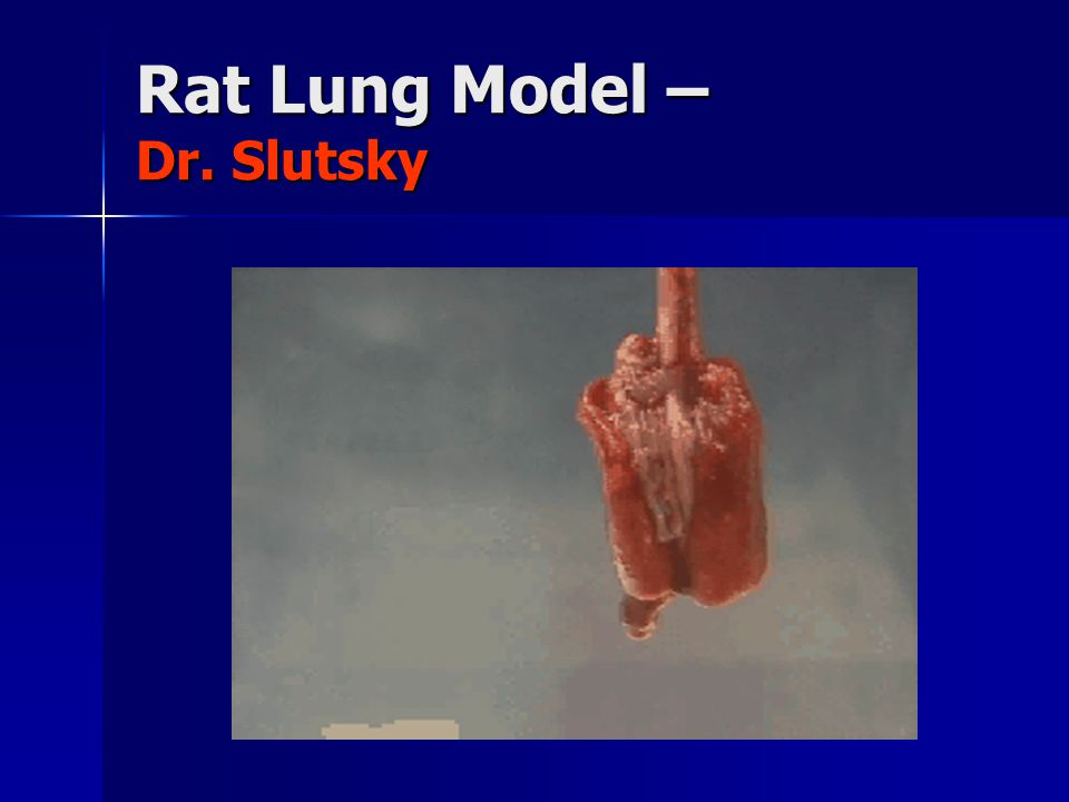 Rat Lung Model – Dr. Slutsky