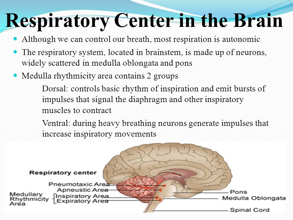 Respiratory Center in the Brain