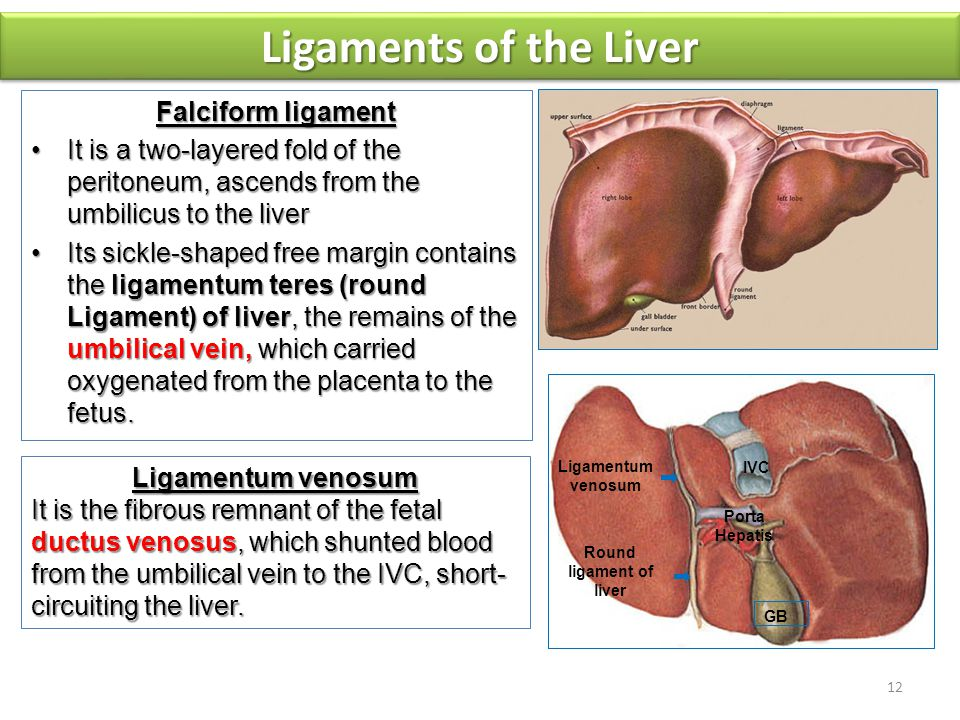 Liver & Spleen Dr. Vohra & Dr. Sana. - ppt video online ...