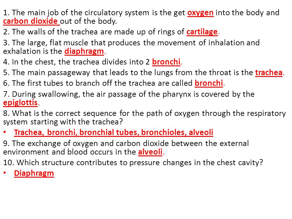 1. The main job of the circulatory system is the get oxygen into the body and carbon dioxide out of the body.