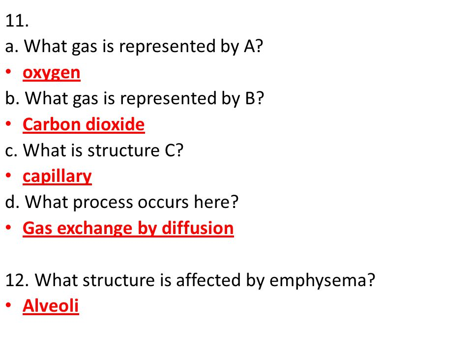 11. a. What gas is represented by A oxygen. b. What gas is represented by B Carbon dioxide. c. What is structure C