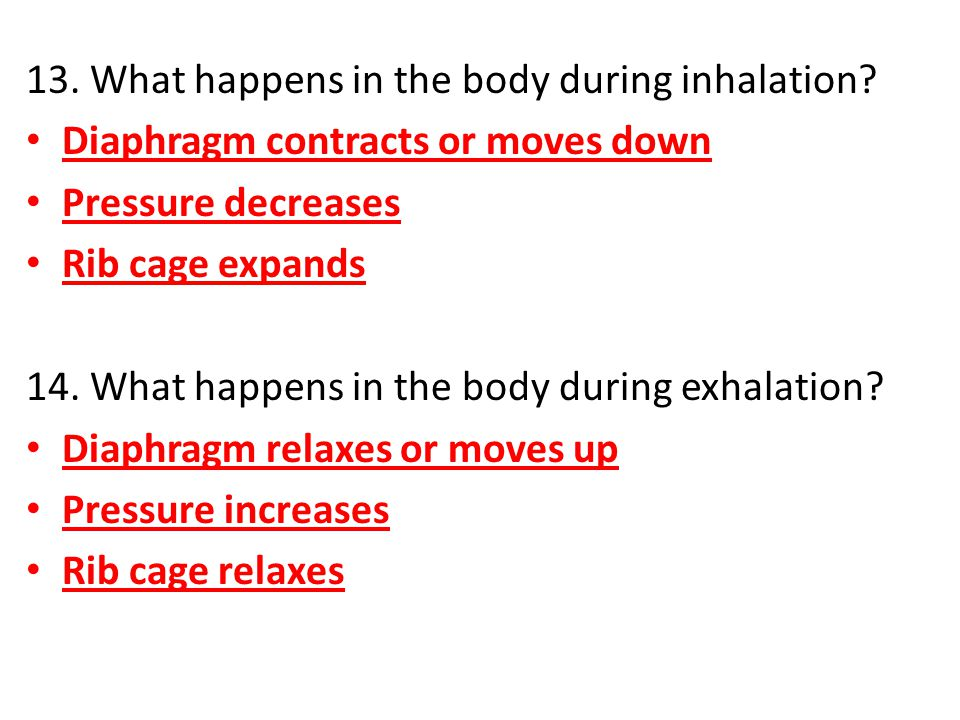 13. What happens in the body during inhalation