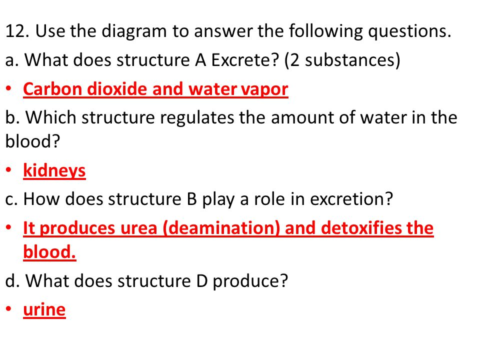 12. Use the diagram to answer the following questions.