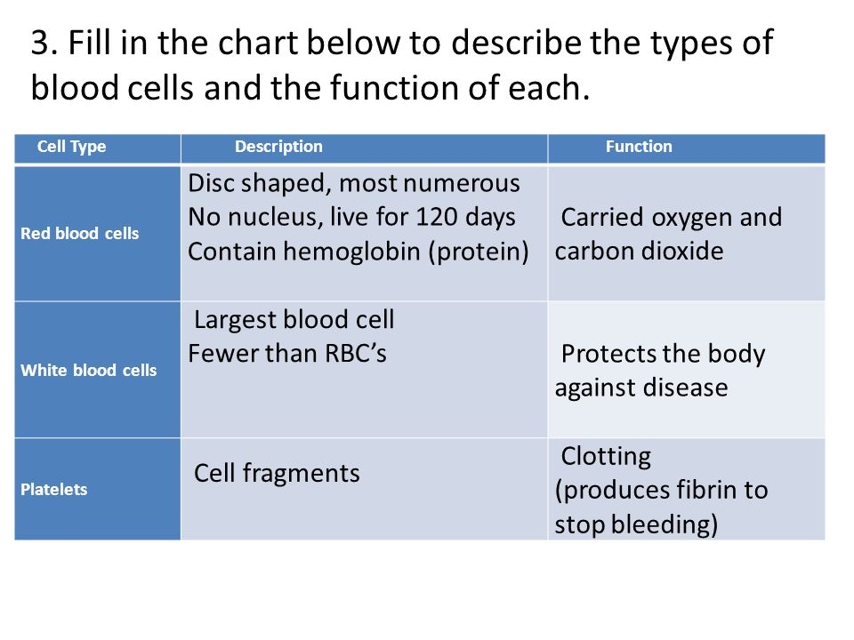 3. Fill in the chart below to describe the types of blood cells and the function of each.