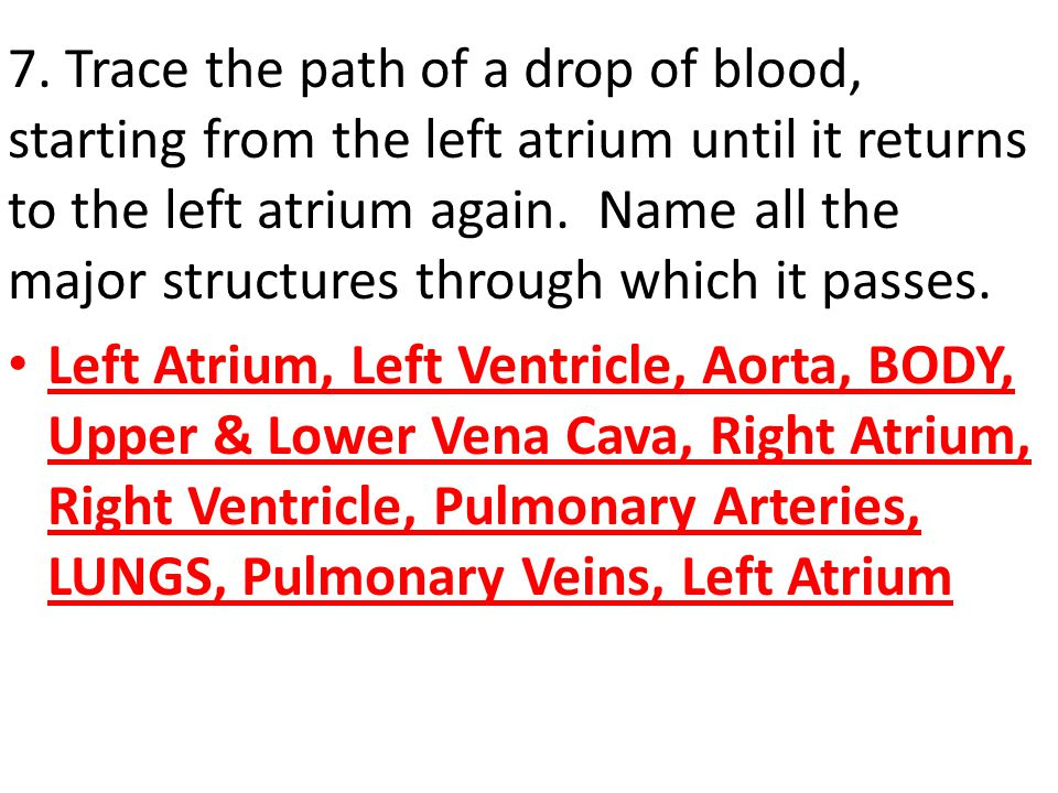 7. Trace the path of a drop of blood, starting from the left atrium until it returns to the left atrium again. Name all the major structures through which it passes.