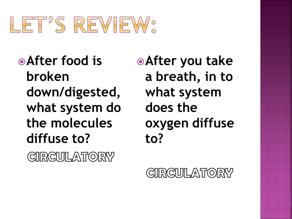 Let's Review: After food is broken down/digested, what system do the molecules diffuse to CIRCULATORY.