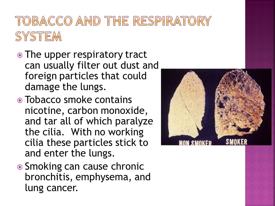 Tobacco and the Respiratory System