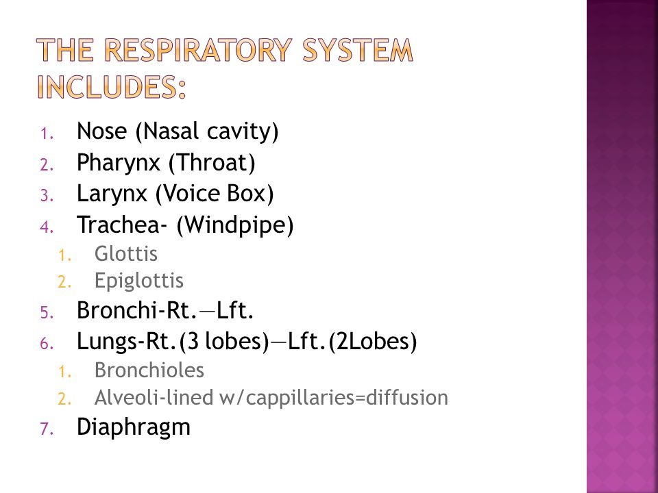 The Respiratory System Includes: