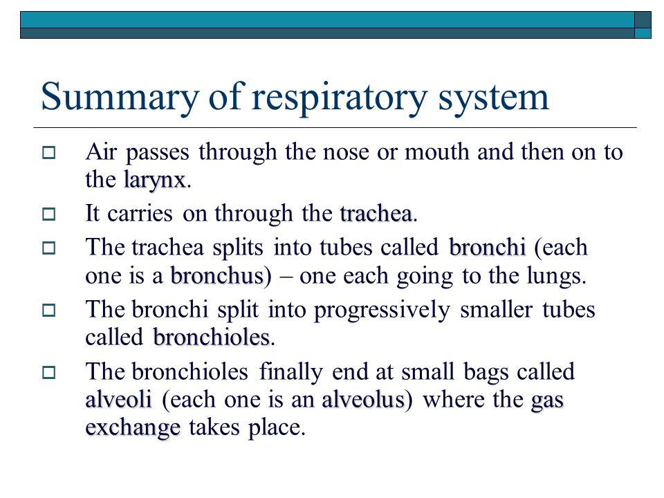 Summary of respiratory system