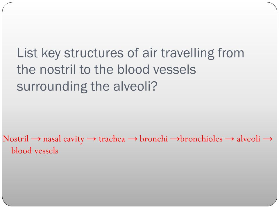 List key structures of air travelling from the nostril to the blood vessels surrounding the alveoli