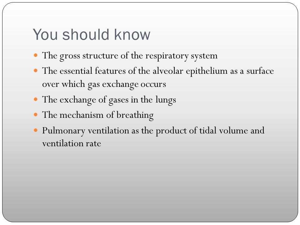 You should know The gross structure of the respiratory system