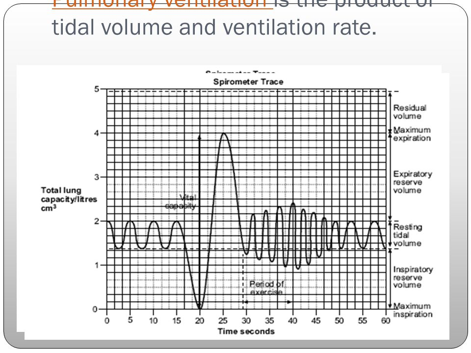 Pulmonary ventilation is the product of tidal volume and ventilation rate.