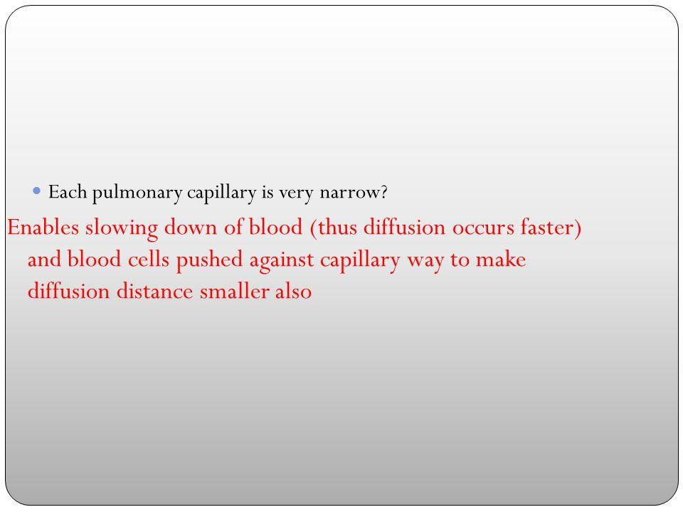 Each pulmonary capillary is very narrow