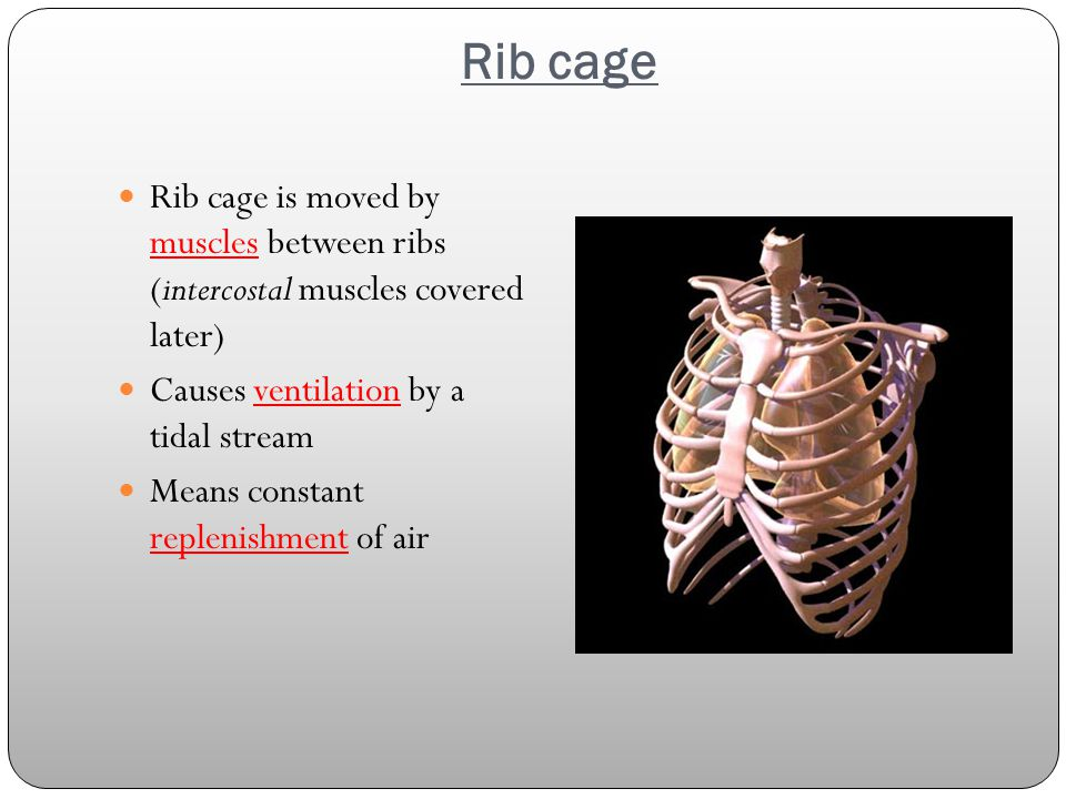 Rib cage Rib cage is moved by muscles between ribs (intercostal muscles covered later) Causes ventilation by a tidal stream.