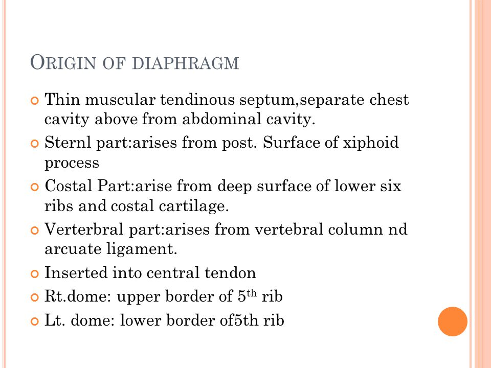 Origin of diaphragm Thin muscular tendinous septum,separate chest cavity above from abdominal cavity.