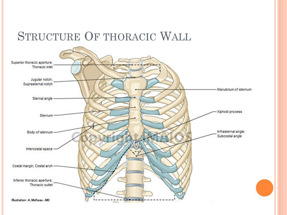 Structure Of thoracic Wall