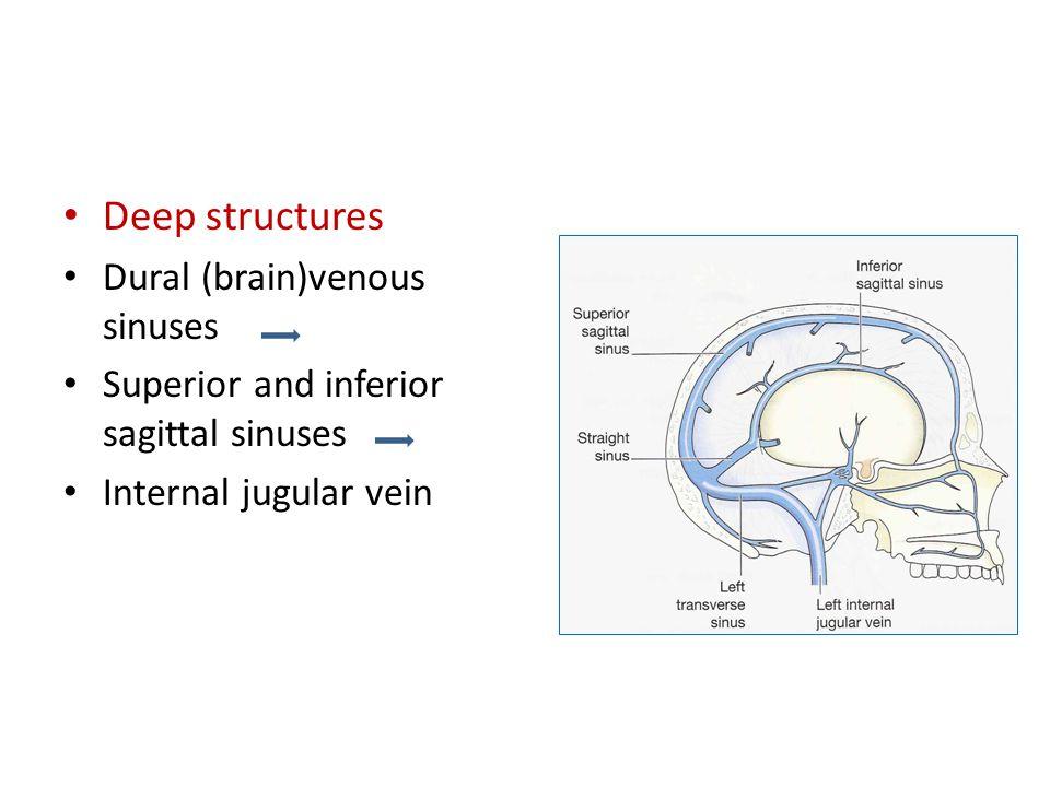 Deep structures Dural (brain)venous sinuses