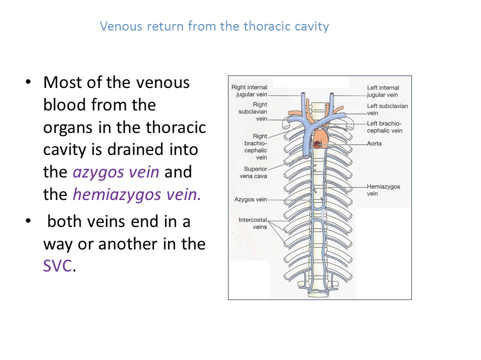 Venous return from the thoracic cavity