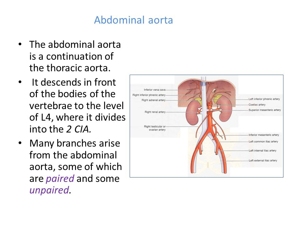 Abdominal aorta The abdominal aorta is a continuation of the thoracic aorta.