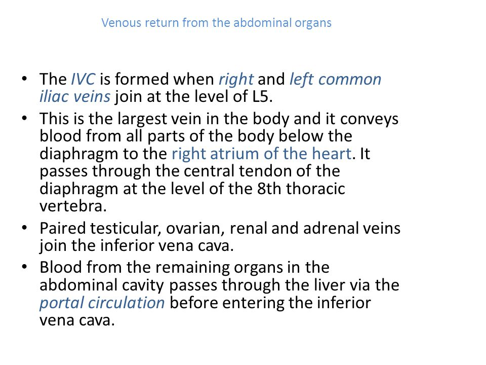 Venous return from the abdominal organs