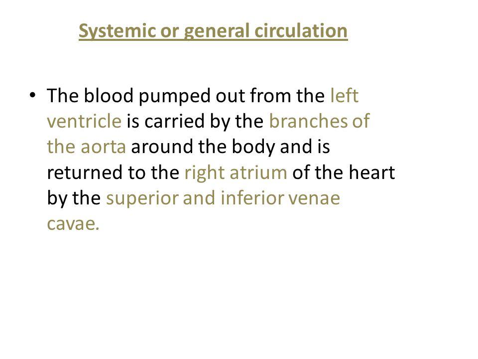 Systemic or general circulation