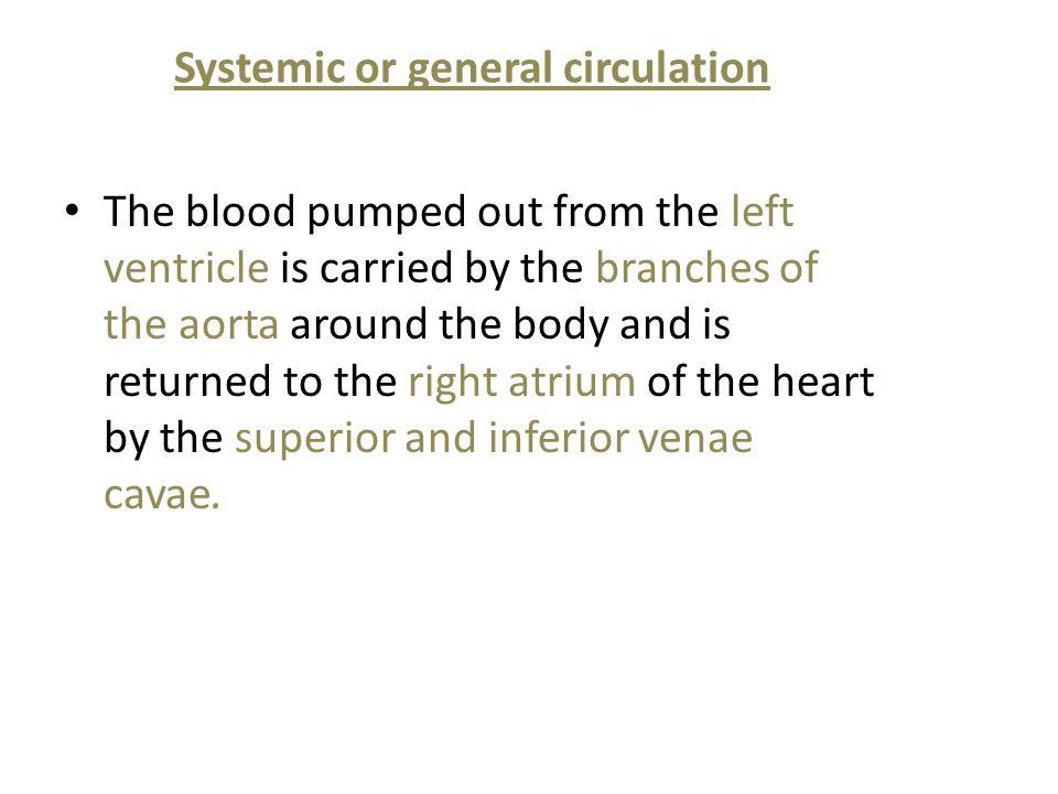 Systemic or general circulation