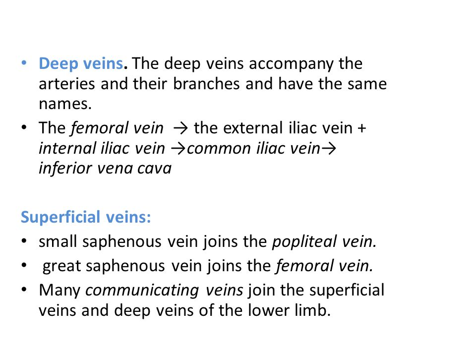 Deep veins. The deep veins accompany the arteries and their branches and have the same names.