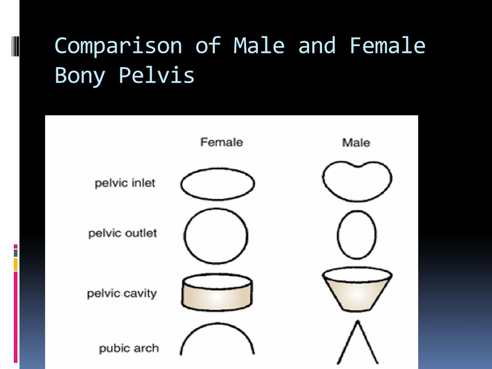 Comparison of Male and Female Bony Pelvis