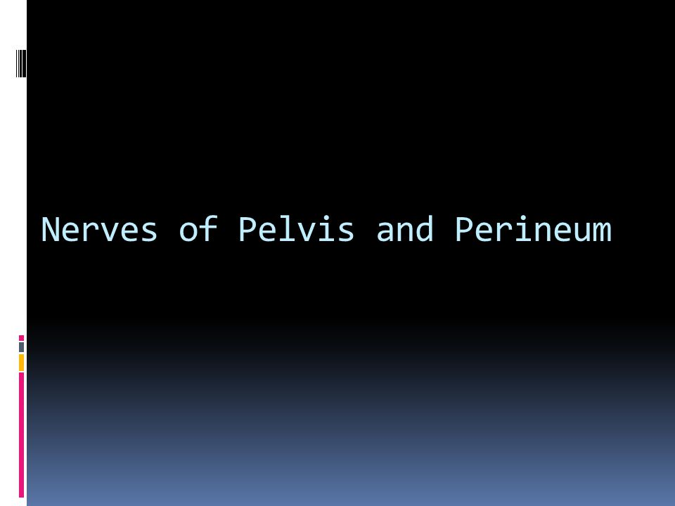 Nerves of Pelvis and Perineum