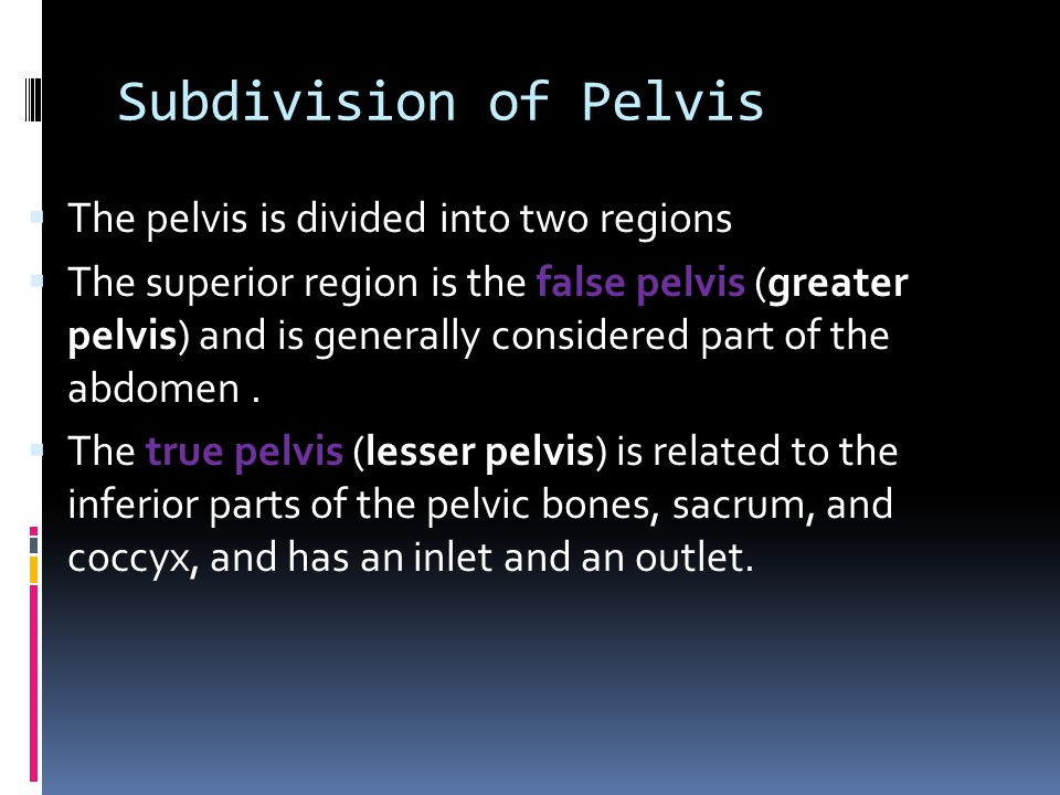 Subdivision of Pelvis The pelvis is divided into two regions