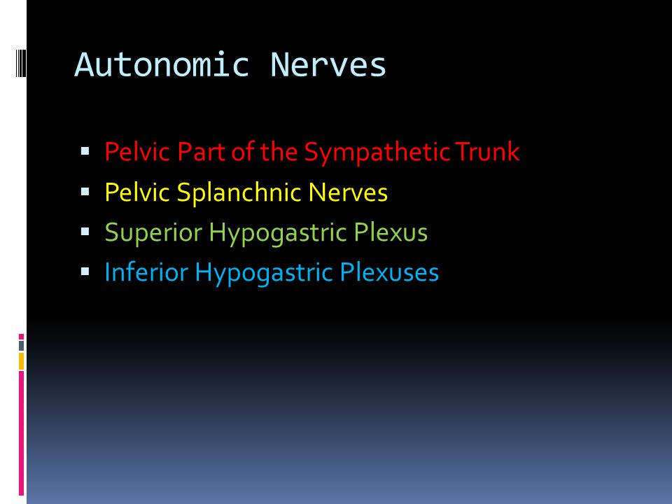 Autonomic Nerves Pelvic Part of the Sympathetic Trunk