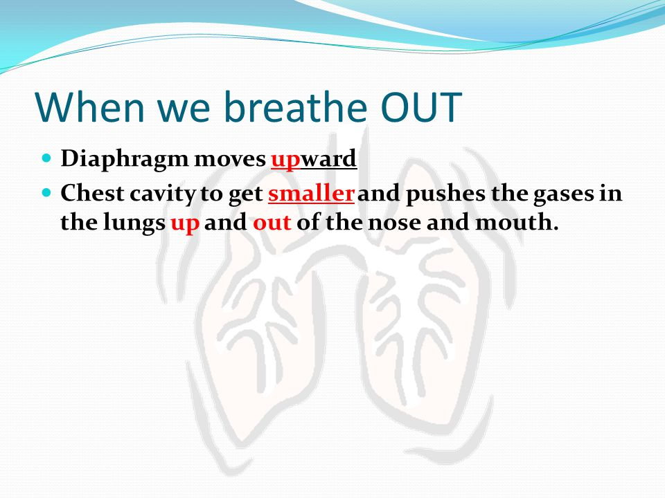 When we breathe OUT Diaphragm moves upward