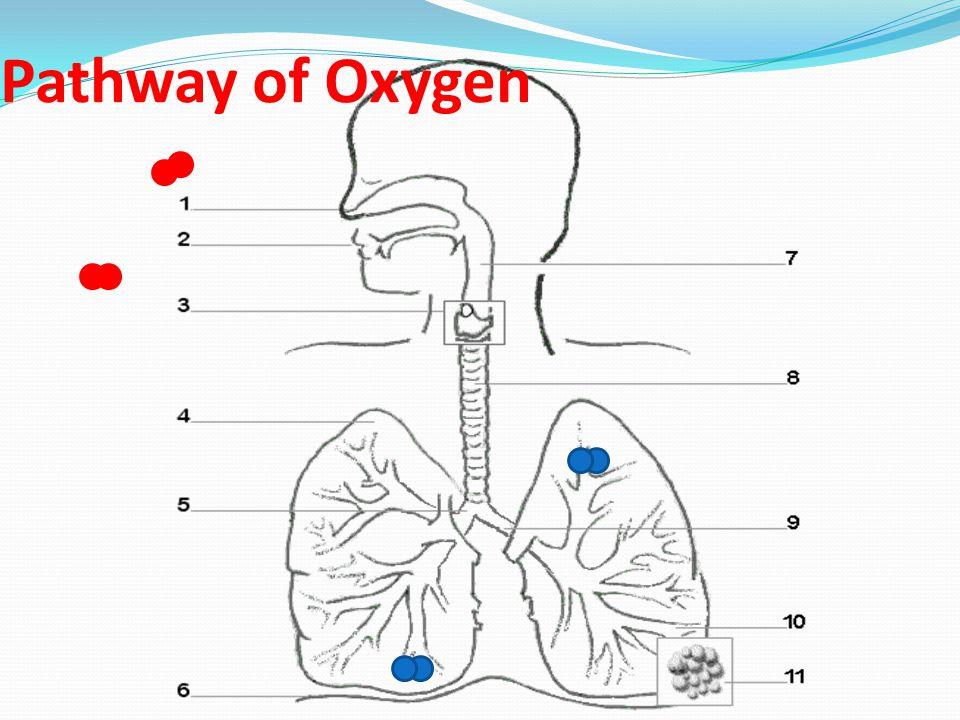 Pathway of Oxygen