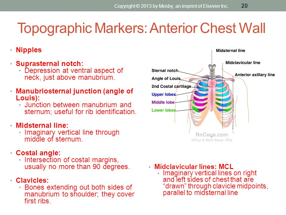 Topographic Markers: Anterior Chest Wall