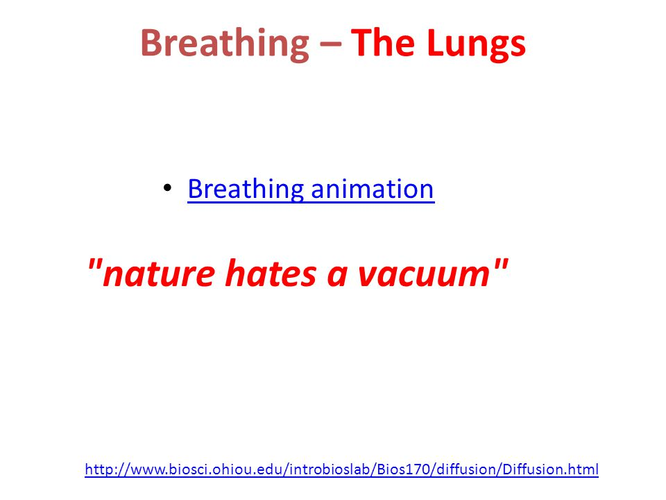 Breathing – The Lungs nature hates a vacuum Breathing animation